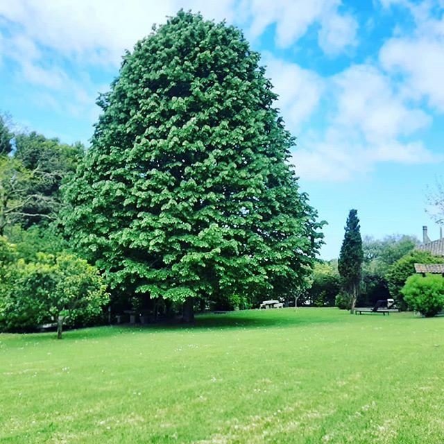 #casadaeirademoledo  #moledo  #nature  #gardens