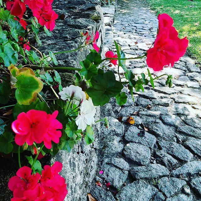#casadaeirademoledo  #flowers  #moledo  #visitcaminha  #sizavieira